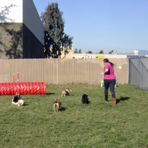 Paradise pet resorts diamond certified paradise pet resorts provides exercise routines for dogs of every size solutioingenieria Image collections