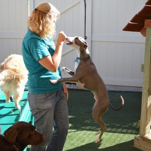 Paradise pet resorts diamond certified paradise pet resorts staff members love playing with dogs and work hard to keep them happy and entertained solutioingenieria Image collections