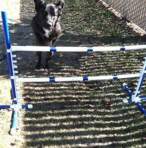 Paradise pet resorts diamond certified an example of paradise pet resorts agility equipment in action solutioingenieria Image collections