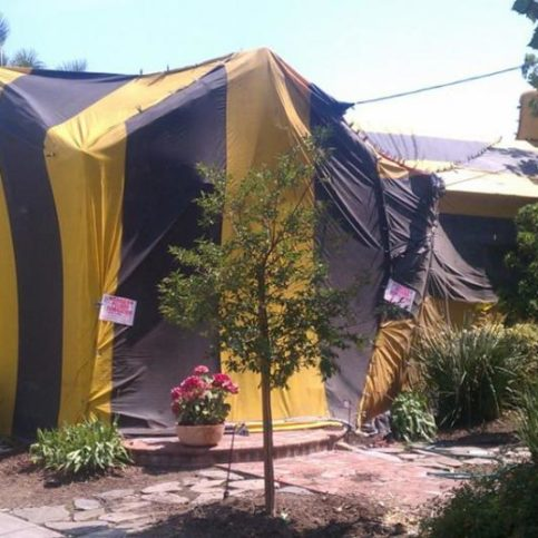 What Are The Dangers Of Termite Tenting A House Hunker & Tenting House For Termites How Long - Best Tent 2018