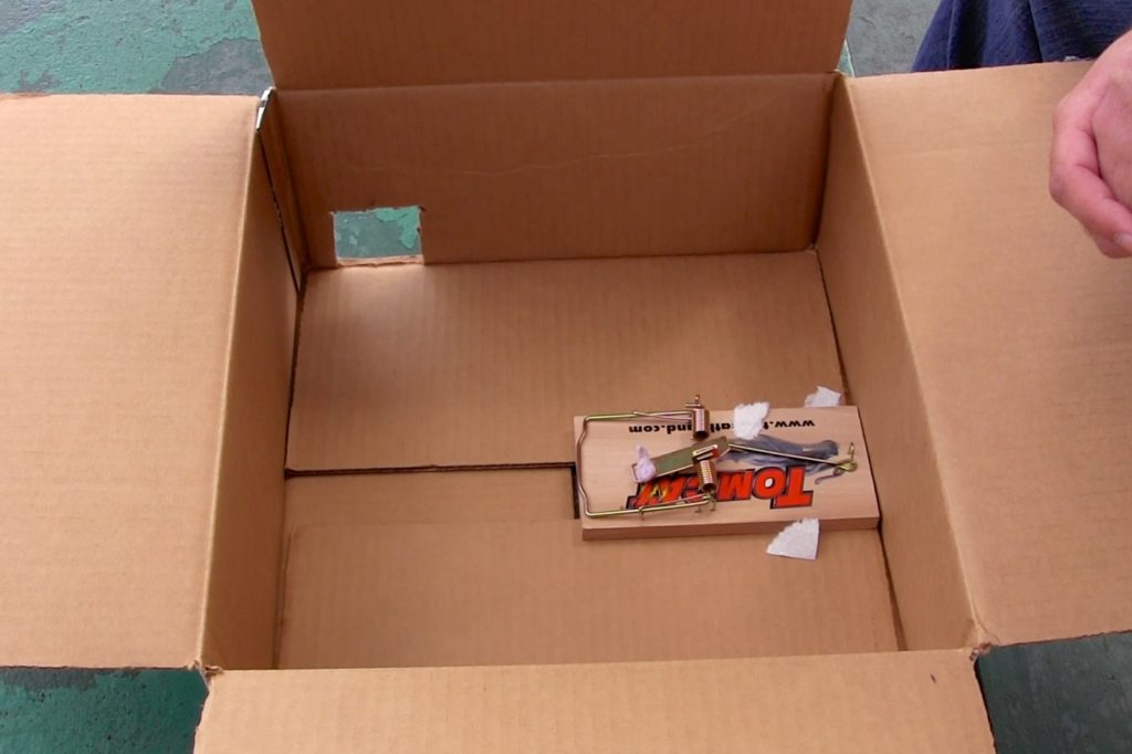 cardboard box with rat trap inside