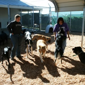 When visiting a kennel, the demeanor of both the staff and the animals can be a telling indicator of the quality of care. Photo: Four Paws Pet Ranch (2015)