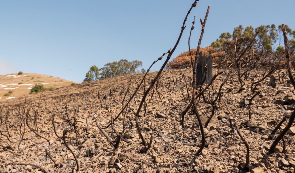 california-drought-water-conservation