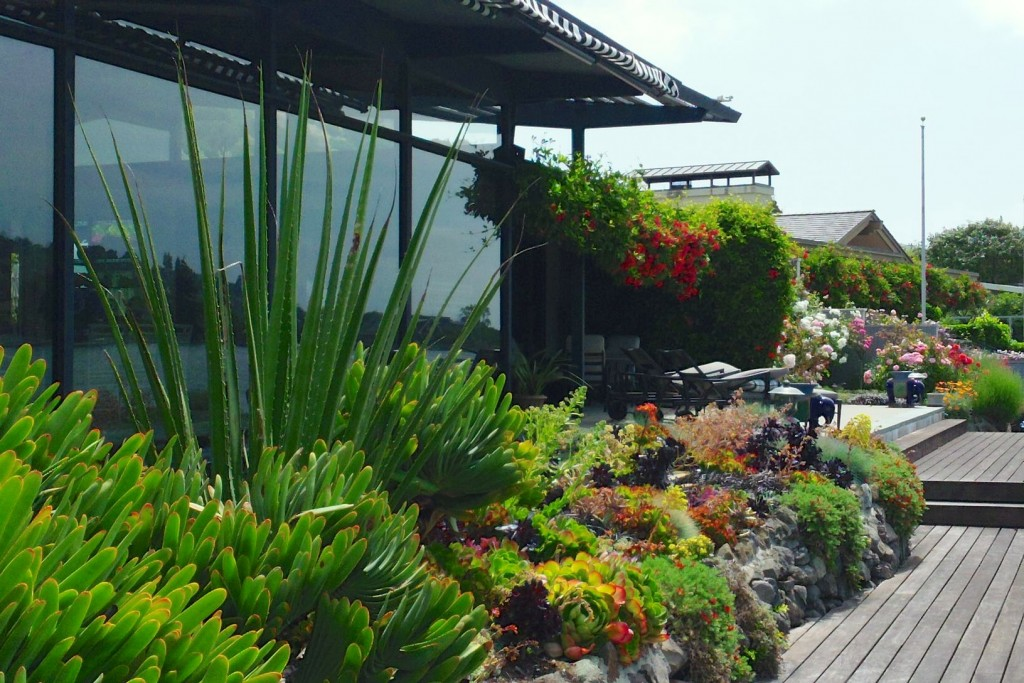 In addition to amending wasteful watering habits, another way to combat the drought is  installing native, drought-tolerant plants. Photo: Inscapes (2015)